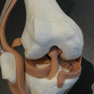 knie anatomie